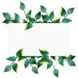 Guirnalda pintada a mano de la acuarela con las hojas y las ramas del verde Foto de archivo libre de regalías