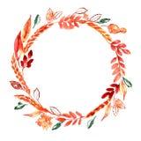 Guirnalda pintada a mano del otoño de la acuarela con los oídos y las hojas de la naranja Decoración de la acción de gracias Imagen de archivo libre de regalías