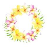Guirnalda tropical de la acuarela con las flores y las hojas del plumeria Puede ser utilizado para las tarjetas, casandose la inv ilustración del vector