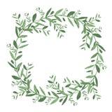 Guirnalda verde oliva de la acuarela Ilustración aislada del vector