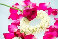 Guirnalda y rosas del jazmín Fotografía de archivo libre de regalías