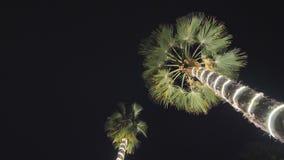 Guirnaldas de la Navidad e iluminación ligera en un árbol de dos palmas en la noche dubai almacen de metraje de vídeo
