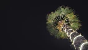 Guirnaldas de la Navidad e iluminación ligera en una palmera en la noche dubai metrajes