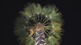 Guirnaldas de la Navidad e iluminación ligera en una palmera en la noche dubai almacen de video