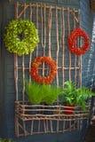 Guirnaldas y plantas en conserva en la estructura del palillo Fotografía de archivo