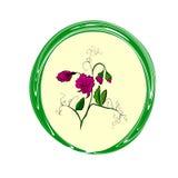 Guisante de olor de la flor Fotografía de archivo libre de regalías