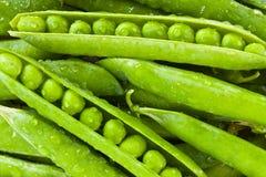 Guisante verde Foto de archivo libre de regalías