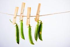 Guisante verde y cuerda en el fondo blanco con la abrazadera Fotos de archivo libres de regalías