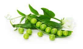 Guisantes verdes en la cáscara aislada en el fondo blanco Fotografía de archivo libre de regalías