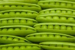 Guisantes verdes en vaina Foto de archivo libre de regalías