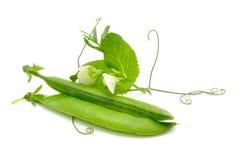 Guisantes verdes en vainas con las hojas y las flores imagen de archivo libre de regalías