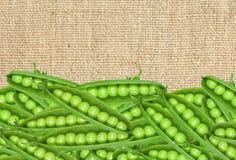 Guisantes verdes frescos en el paño de la arpillera Fotografía de archivo libre de regalías