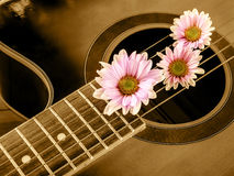 Guitar And Flower Stock Photo