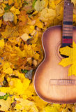 Guitar in autumn leaves. Royalty Free Stock Photography