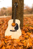 Guitar on autumn leaves Stock Image