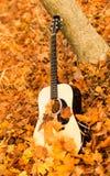 Guitar on autumn leaves Stock Photos