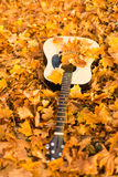 Guitar on autumn leaves Royalty Free Stock Photography