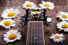 Guitar and daisy flowers Royalty Free Stock Images