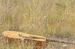 Guitar in field of wild flowers Royalty Free Stock Photography