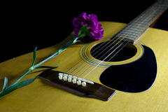 Guitar & Flower. Flower carnation and Guitar. Sound of music and beautiful of nature royalty free stock images