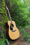 Guitar in the forest Stock Photography