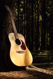 Guitar in forest. Musical instrument in nature with trees stock photo