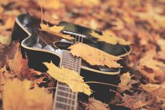 Guitar and leafs in the forrest stock photography