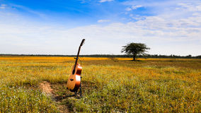 The guitar with meadow background. The acoustic guitar with meadow and blue sky background royalty free stock photography