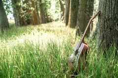 Guitar in nature. Acoustic guitar nature ,the concept of music and nature Stock Images