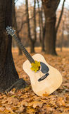 Guitar in nature Stock Photo