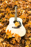 Guitar in nature Stock Photography
