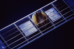 Guitar Pick on Fret-board. Fret-board of an electric guitar, focus on horn pick between string Royalty Free Stock Images