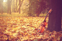 Guitar standing by tree in park Royalty Free Stock Photo