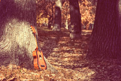 Guitar standing by tree in park Stock Images