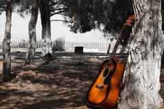 guitar on a tree at a park royalty free stock image