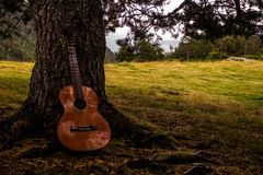Guitar resting under a tree royalty free stock photo