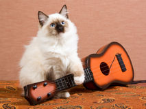 Guitare de withminiature de chaton de Ragdoll Images libres de droits