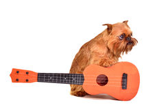Guitarist dog Stock Images