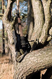 Guitarra na árvore Imagem de Stock