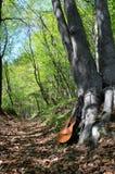 Guitarra vieja en un bosque Imagenes de archivo
