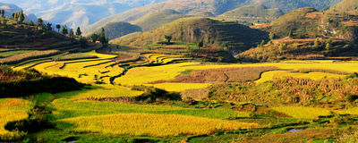 Guizhou terraces. Eastphoto, tukuchina, Guizhou terraces, Industry, Agriculture, Natural Royalty Free Stock Photo
