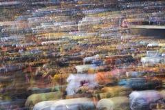 Gujaratifolk-sänger Atul Purohit zeichnet große Menge in Chicago Stockfotografie