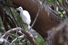 Gujratvogel bij meer Royalty-vrije Stock Foto