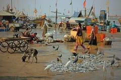 Gujuarati kajaktivitet efter fiskebåtarna har anslutit Arkivbilder