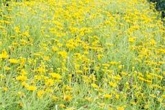 Gul bakgrund för blommafält Arkivfoto