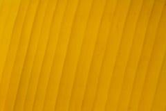 Gul bananbladbakgrund Royaltyfria Bilder