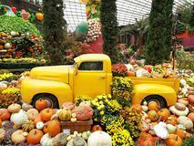 Gul bil med pumpor vid halloween Royaltyfria Foton