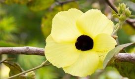 Gul blom för lösa blommor Royaltyfri Foto