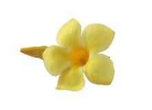 Gul blomma Arkivfoto