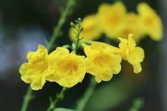 Gul blomma Royaltyfria Foton